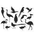 wild bird bird silhouette vector image