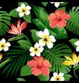 frangipani hibiscus strelitzia vector image