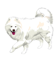 Samoyed dog vector image