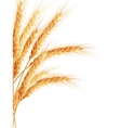 Wheat isolated on white EPS 10 vector image
