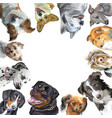 group of dogs different breeds in square isolated vector image