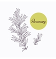 Hand drawn rosemary branch with leves isolated on vector image