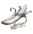 banana logo design template fruit or food vector image