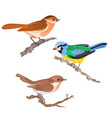 singing birds on branches warbler titmouse vector image