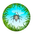 spider hanging on the web vector image