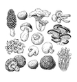 Mushroom hand drawn  Sketch vector image