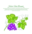 Card with grape leaves vector image vector image