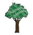 drawing natural tree foliage image vector image