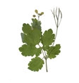 Herbarium with dry pressed Green summer meadow vector image