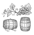 Grape branches and wine barrels vector image