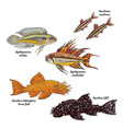 colorful aquarium bottom fishes collection vector image