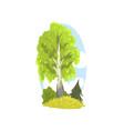 spring or summer landscape scene with birch fir vector image