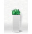 decorative evergreen plant vector image