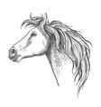 Racehorse head sketch for horse racing design vector image vector image