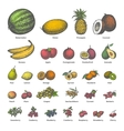 big set different colored juicy ripe fruit vector image
