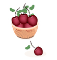 A Brown Basket of Fresh Stack of Apple vector image