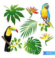 set of tropical flowers leaves and birds vector image vector image