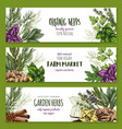 organic herb and spices farm market banner set vector image