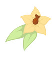 small yellow flower vector image