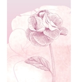 Hand drawn gentle rose on pink background vector image