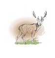 Deer vector image
