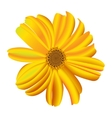 A single daisy flower vector image