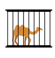 Camel in cage Animal in Zoo behind bars Desert vector image