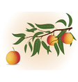 Peach branch vector image