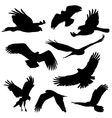 eagles and other big bird silhouettes vector image