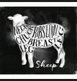 sheep lamb cutting scheme chalk vector image vector image