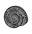 Hand drawn snail shell on white background vector image