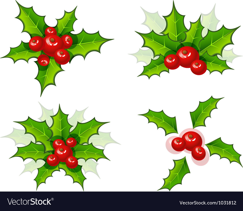 Holly leaves vector