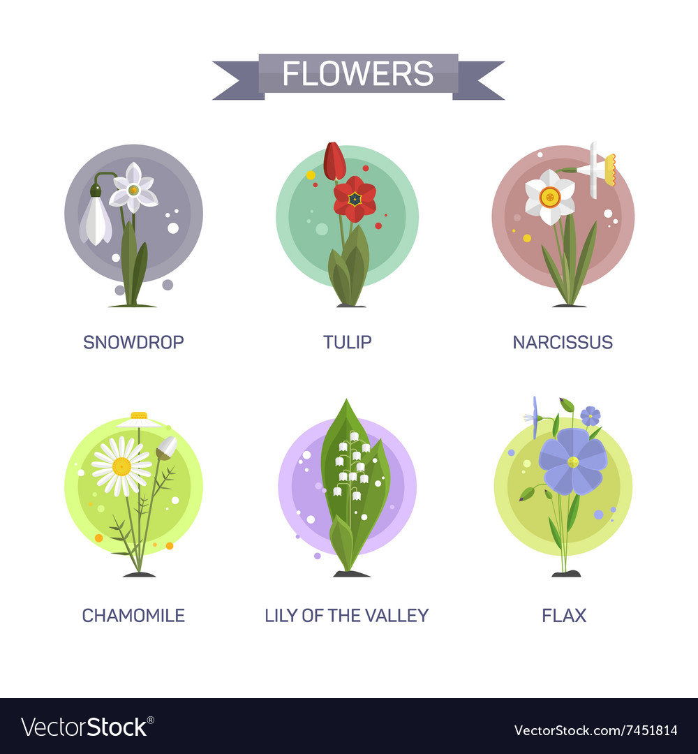 Flowers set isolated on white background vector