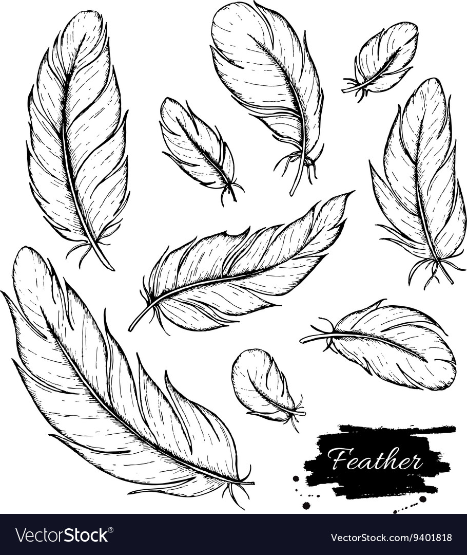 Set of hand drawn feather ink vintage vector
