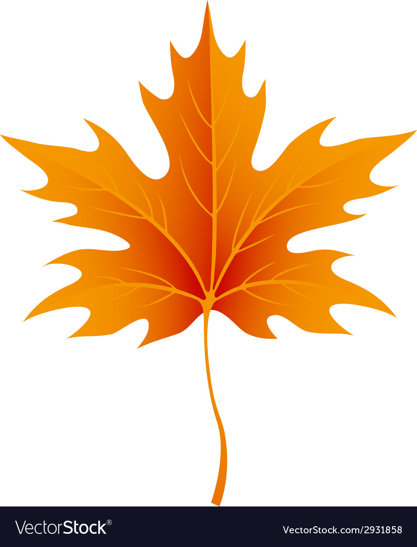 Autumn maple leaves isolated on white vector