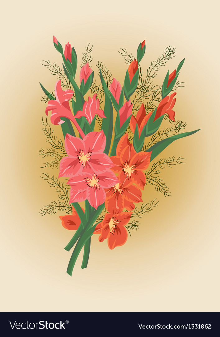 Bouquet of pink and red gladioluses vector