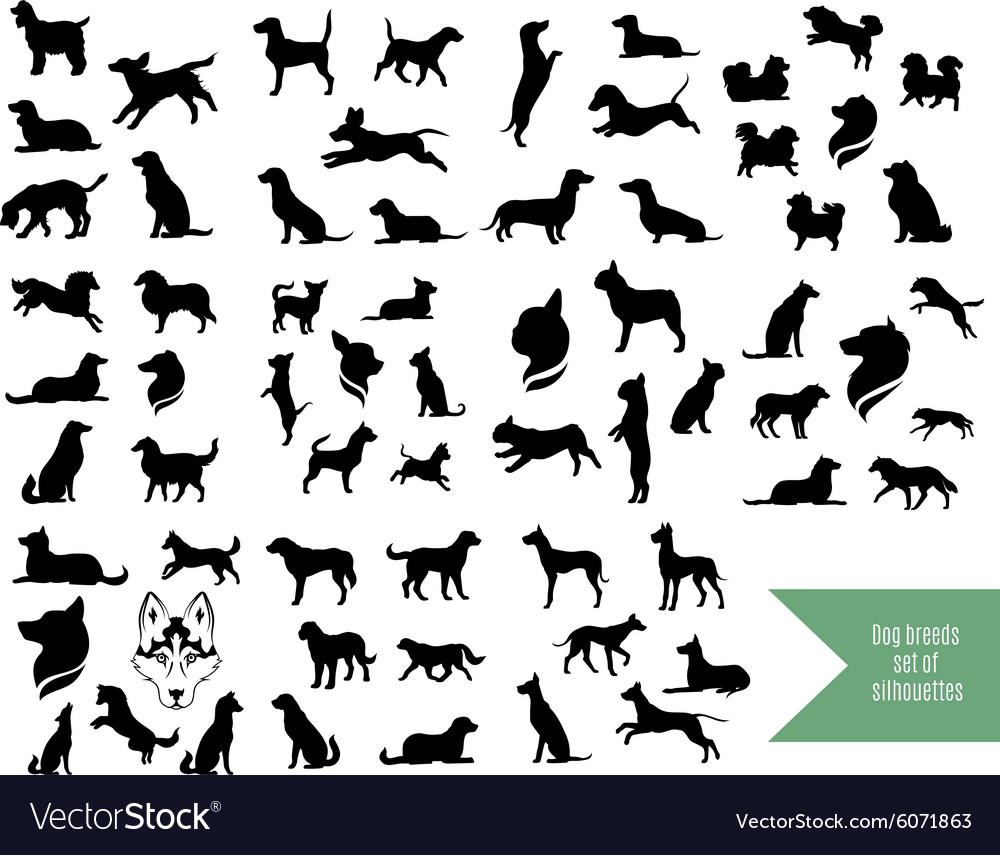 Big set of dog breeds silhouettes vector