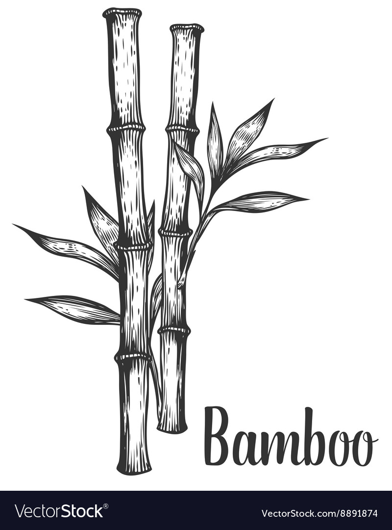 Bamboo stem branches and leaf hand drawn vector