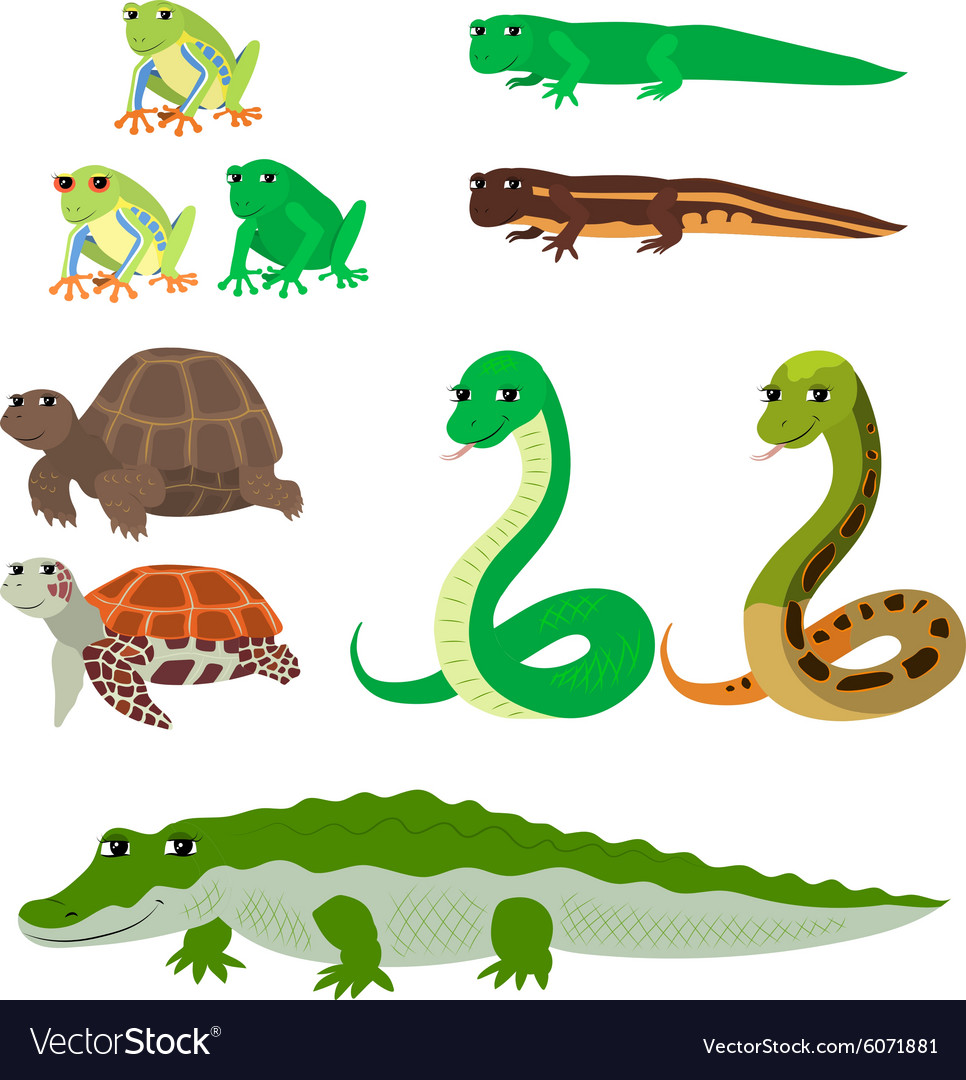 Cartoon set tree frog newt aquatic turtle snake vector