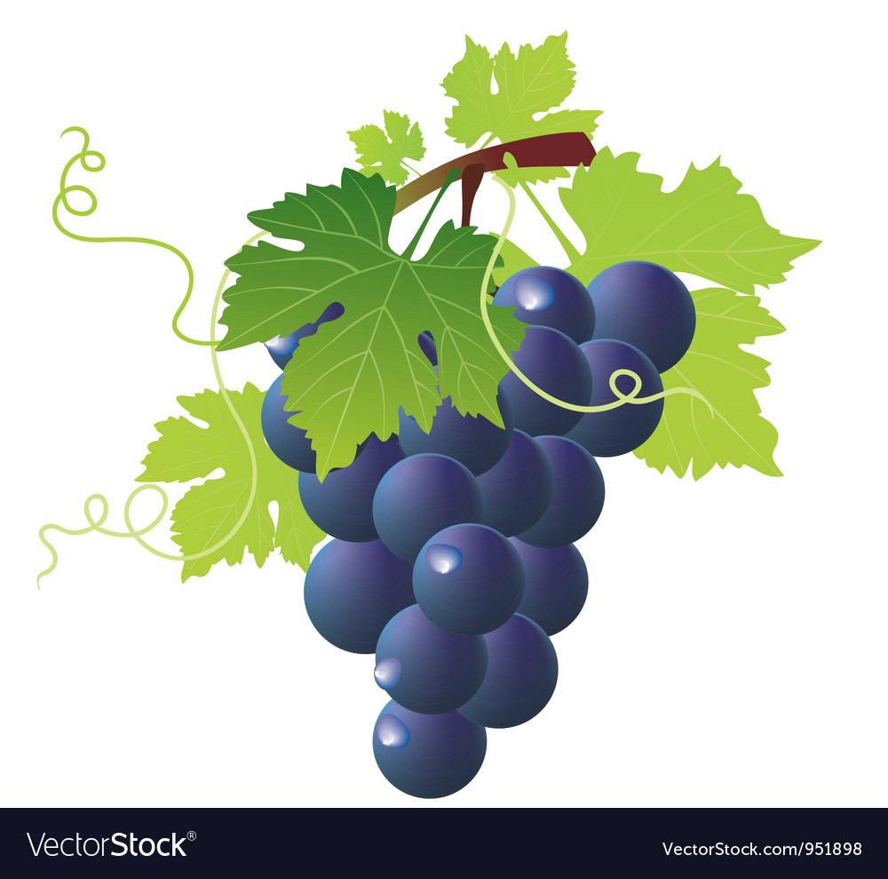 Vine black vector