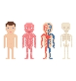 Human Body Anatomy - nude body muscle blood vector image
