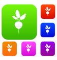 fresh radish set collection vector image