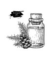 pine essential oil bottle and fir hand drawn vector image