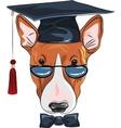 funny graduated dog Bullterrier vector image