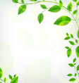 Vines Background vector image
