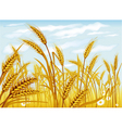 wheat in the field vector image vector image