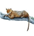 Watercolor leopard vector image