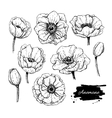vintage anemone set Hand drawn vector image