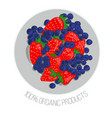 strawberry and blueberry vector image
