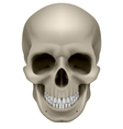Human skull front view Digital on white vector image vector image